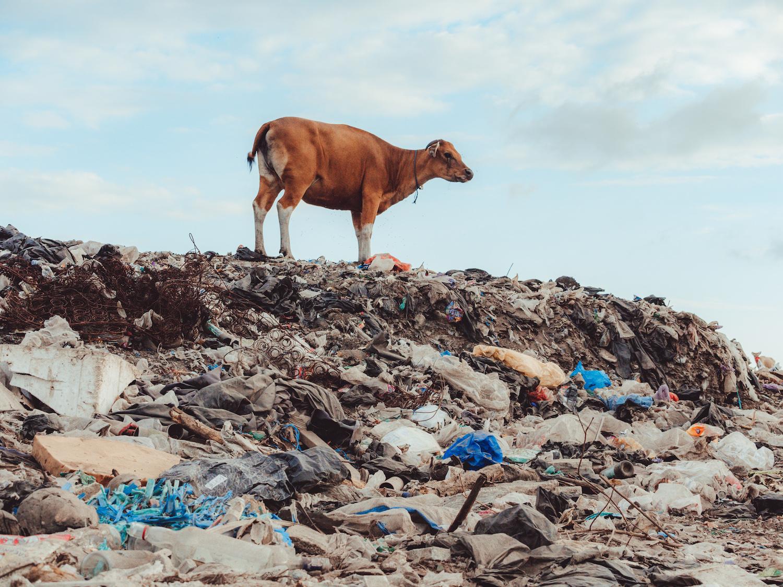 Le vrai problème, ce n'est pas le plastique