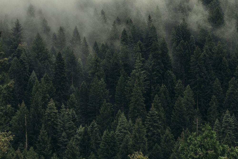 La compensation carbone est une illusion