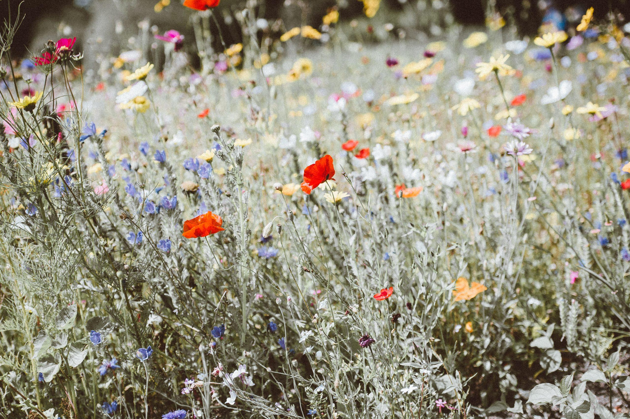 Parfums naturels : s'affranchir de la chimie est encore possible