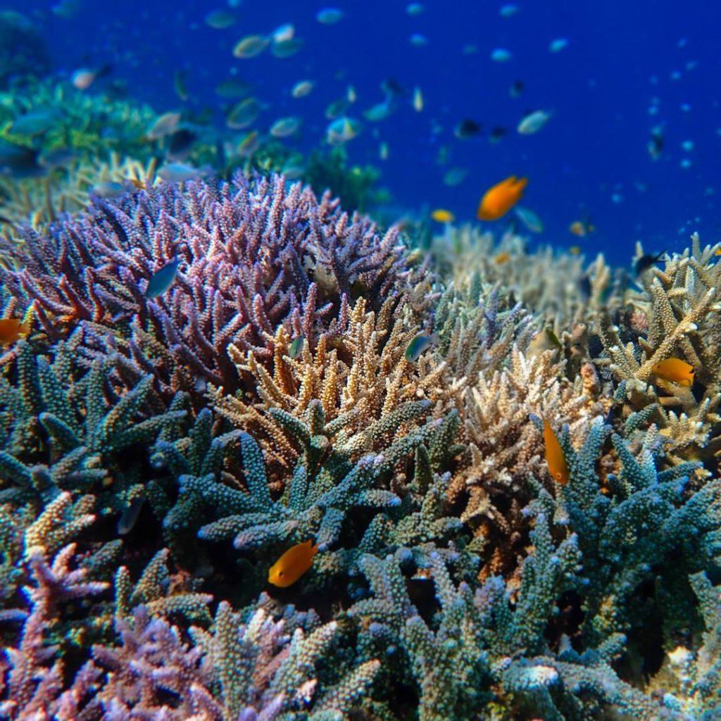 Récif corallien en bonne santé