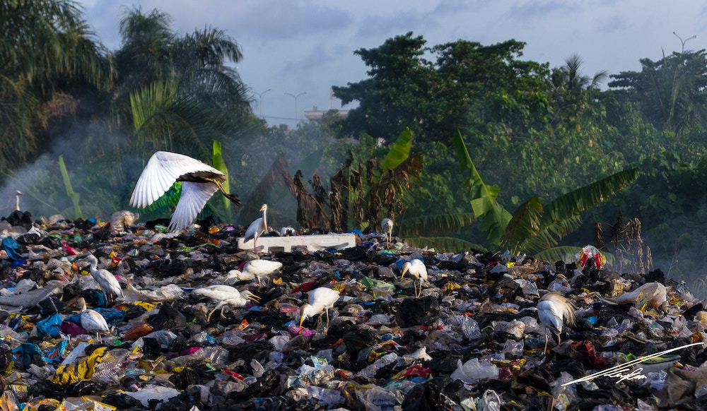 Recyclage des déchets plastiques marins : attention au greenwashing