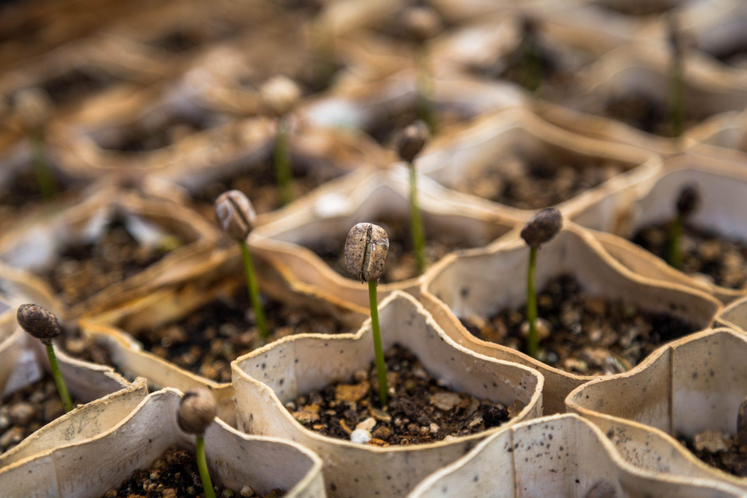 Semences industrielles vs. semences paysannes : à qui appartient le vivant ?